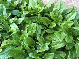 生ごみ処理機バイオクリーン 堆肥ご活用事例